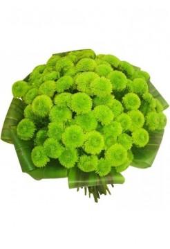 Букет из 15 кустовых зеленых хризантем
