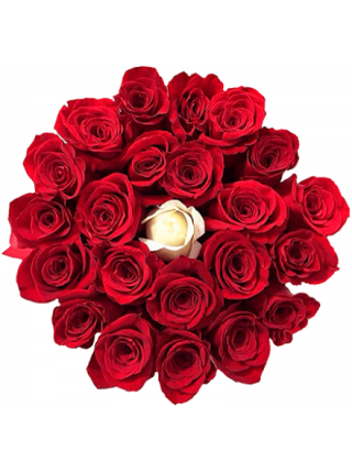 25 роз в коробке